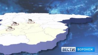 Карта нашествия комаров в Воронежской области. Какие районы оказались «на осадном положении»