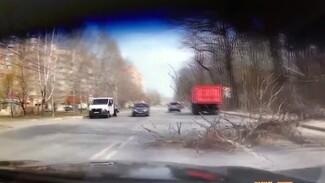 Рухнувшее дерево едва не разбило легковушку в Воронеже: появилось видео