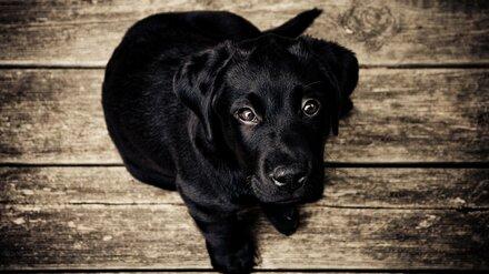 Полиция проверит информацию о двух убитых бывшим зеком щенках в Воронеже