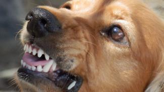 Ещё в трёх селах Воронежской области объявили карантин по бешенству животных