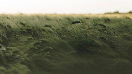 МЧС объявило штормовое предупреждение из-за сильного ветра в Воронежской области