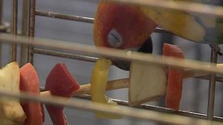 Из-за эпидемии птичьего гриппа в Воронежском зоопарке уничтожат всех птиц
