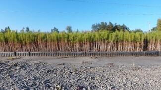 Бор в миниатюре. На месте горельников в Воронежской области высадят миллионы молодых деревьев