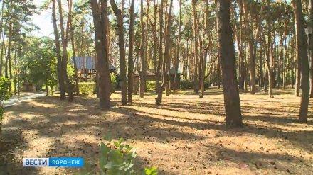 К реконструкции парка «Танаис» в Воронеже приступят не раньше 2020 года