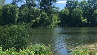 В Воронежской области из пруда достали труп мужчины