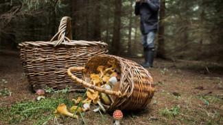 Под Воронежем спасли пожилого грибника, потерявшегося на болоте