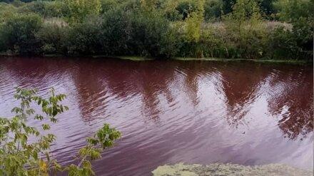 Вода в пруду в Воронежской области стала кроваво-красной