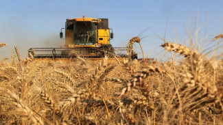 Воронежские аграрии набирают темп: собран второй миллион тонн зерна