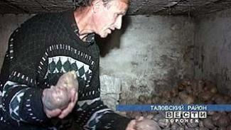 Александр Аносов вырастил 26 сортов картофеля