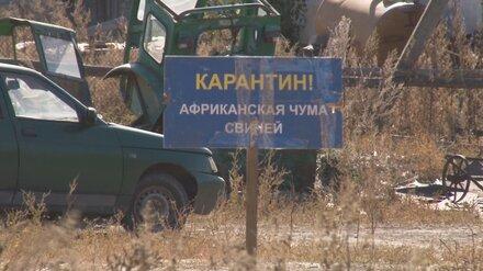 Фермера обвинили в распространении АЧС в районе Воронежской области