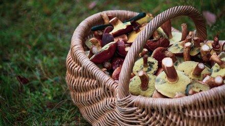 В Воронежской области грибами отравились четверо детей