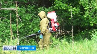 Две обработки в Павловске не помогли снизить численность комаров
