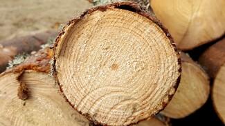 Бывший воронежский лесник незаконно срубил деревьев на 4 млн