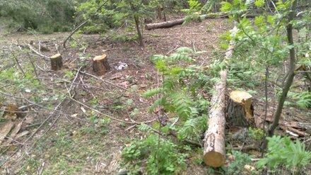 В воронежском лесопарке Оптимистов возобновили санитарную вырубку