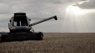 Под Воронежем комбайн задавил рабочего в поле