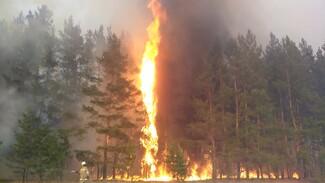 Заповедник сообщил о возможной гибели барсуков на лесном пожаре в Воронежской области