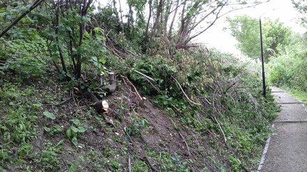 Воронежцы сообщили о вырубке деревьев в Берёзовой роще