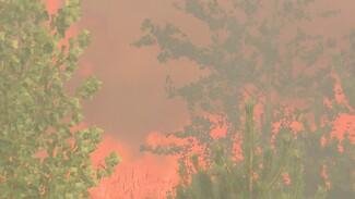 Пожар на Кожевенном кордоне в Воронеже уничтожил около 20 га леса