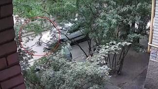 Огромная собака набросилась на парня во дворе воронежской 9-этажки: появилось видео