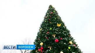 В воронежских парках установили новогодние ёлки