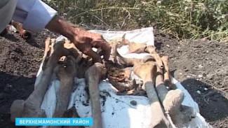 В Верхнем Мамоне обнаружили останки советских солдат
