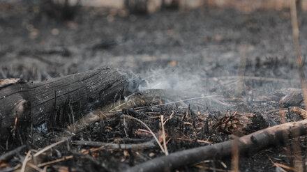 Спасатели локализовали крупный лесной пожар в воронежском райцентре
