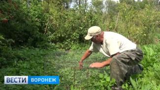 Не повторять, опасно! В Воронежской области  диких лис ловят на приманку