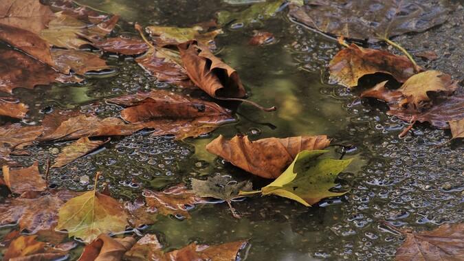 Последнее выходные сентября в Воронеже будут дождливыми и прохладными