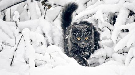 В Воронежской области на выходных станет холоднее