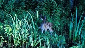Воронежский заповедник поделился редкими кадрами с детёнышами разных животных