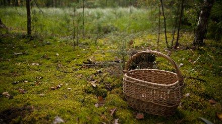 В Воронежской области пенсионерка ушла в лес за грибами и пропала