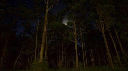 Воронежцы в ноябре увидят в утреннем небе Меркурий