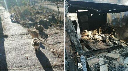 Пожар в частном приюте в Воронежской области оставил на морозе 20 кошек