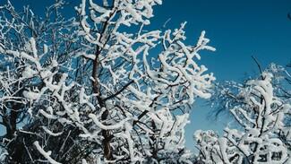 Тёплая погода установила в Воронеже температурный рекорд