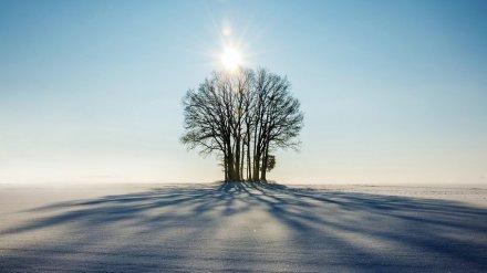 Метеорологи дали прогноз на первую неделю зимы в Воронежской области