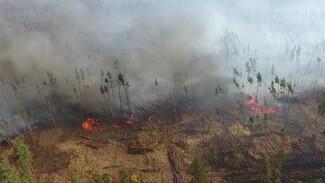 Площадь пожаров в двух районах Воронежской области выросла до 266 га