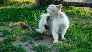 Карантин по бешенству животных объявили ещё в трёх сёлах Воронежской области
