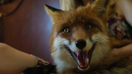 Более 3,2 тыс. воронежцев обратились к врачам после нападения животных