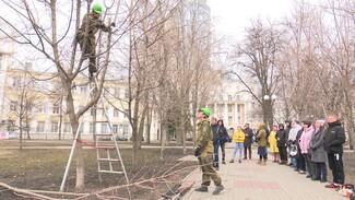 Специалисты научили воронежцев правильно обрезать ветви деревьев