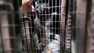 Жестокость и сильнодействующие вещества. Как страдали животные в контактных зоопарках в Воронеже