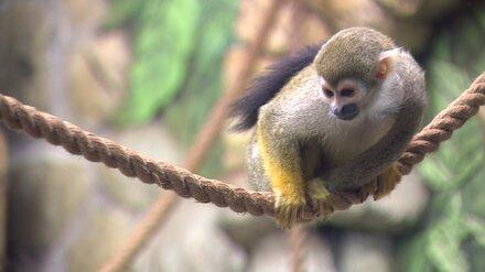 Многодетным семьям предложили бесплатно посетить Воронежский зоопарк