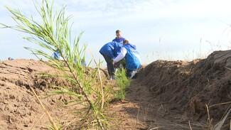 «Отдаём дань памяти». В Воронеже в честь погибших в годы войны высадили сосны и берёзы