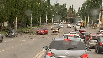 Упавший тополь оборвал провода и спровоцировал пробку на Левом берегу Воронежа