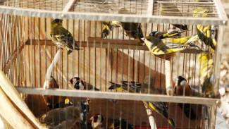 Экологи призвали воронежцев не покупать диких птиц на Благовещение