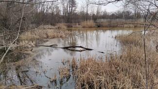 Из пруда в зловонное болото. Жители воронежского райцентра сообщили об экологическом ЧП