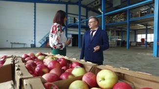 Любовь и стыд. Воронежский «яблочный король» рассказал о движущих силах своей карьеры