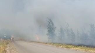 Ещё три автобуса отправили на эвакуацию воронежцев из-за пожара на Кожевенном кордоне