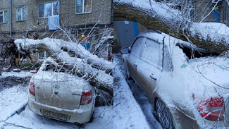 Воронежцы сообщили о 14 рухнувших во время сильного ветра и снега деревьях