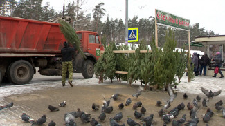 Во время рейда в Воронеже нашли 10 стихийных ёлочных базаров