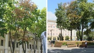 Воронежские экологи опровергли гибель деревьев в «одном из красивейших скверов Европы»